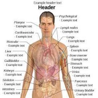 physiology human anatomy boddy