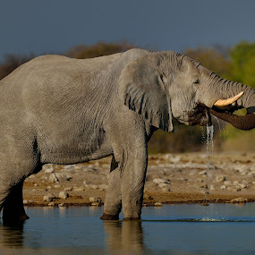 Drinking Time by Jan Jacobs - Animals Other