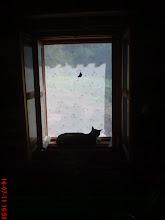 Photo: ukochane miejsce kota Filusia - opalanie na oknie w domu, no i jakiś motylek