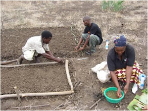 Photo: Seedbed construction at WCS training on SRI conducted by Henry Ngimbu in Mfuwe in November 2009