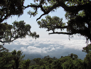 Photo: Cloud forest