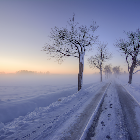 M i s t y - R o a d by Manu Heiskanen - Uncategorized All Uncategorized ( footprints, skyline, sky, winter, tree, sunset, snow, road, prints, paulinawolekpardon, mist )