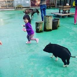 平塚市総合公園ふれあい動物園