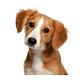 صدای حیوانات(با تلفظ انگیلسی و فارسی) for PC-Windows 7,8,10 and Mac