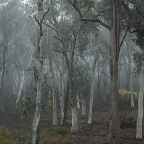 Fog in the Eucalypts by I Snapit - Landscapes Weather (  )