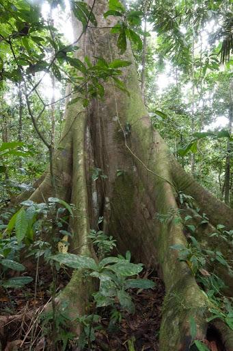 Amazon Rainforest Wallpaper HD