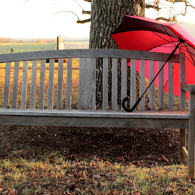 Red Umbrella by Freda Nichols - City,  Street & Park  City Parks ( wooden, red, tree, bench, umbrella, pwcbenches, shadows )