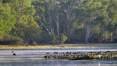 Photo: Day 3 - Anbangbang Billabong © Ian Morris