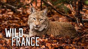 Wild France thumbnail