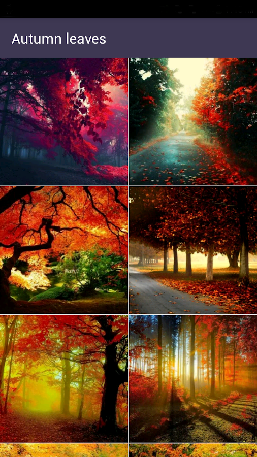 autumn wallpapers android apps on google play