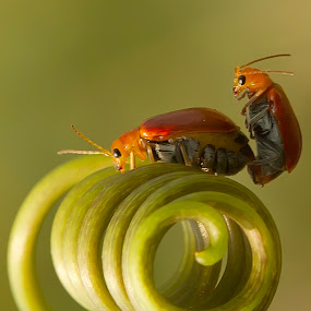 Love is Load by Faiq Alfaizi - Animals Insects & Spiders