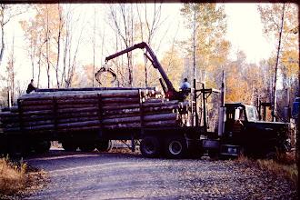 Photo: Unloading logs.