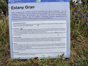 Photo: 117 espèces d'oiseaux ,cataloguées autour dels Estanys, endémiques mais aussi site de repos de nourrissage et halte pour les migrateurs, + des invertébrés des amphibiens et reptiles,et de nombreux mamiphères