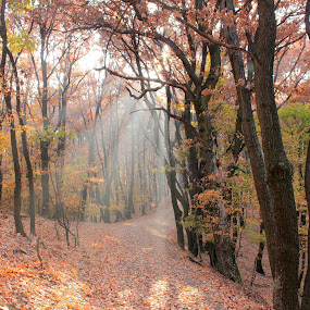 autumn light by Cosmin Popa-Gorjanu - Landscapes Forests ( autumn, forest, road, light )