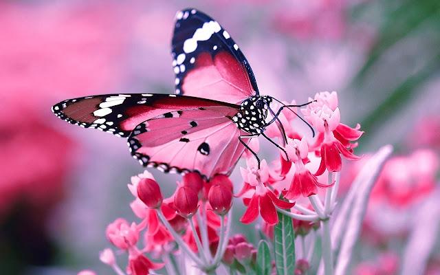 Butterflies Full HD Tab