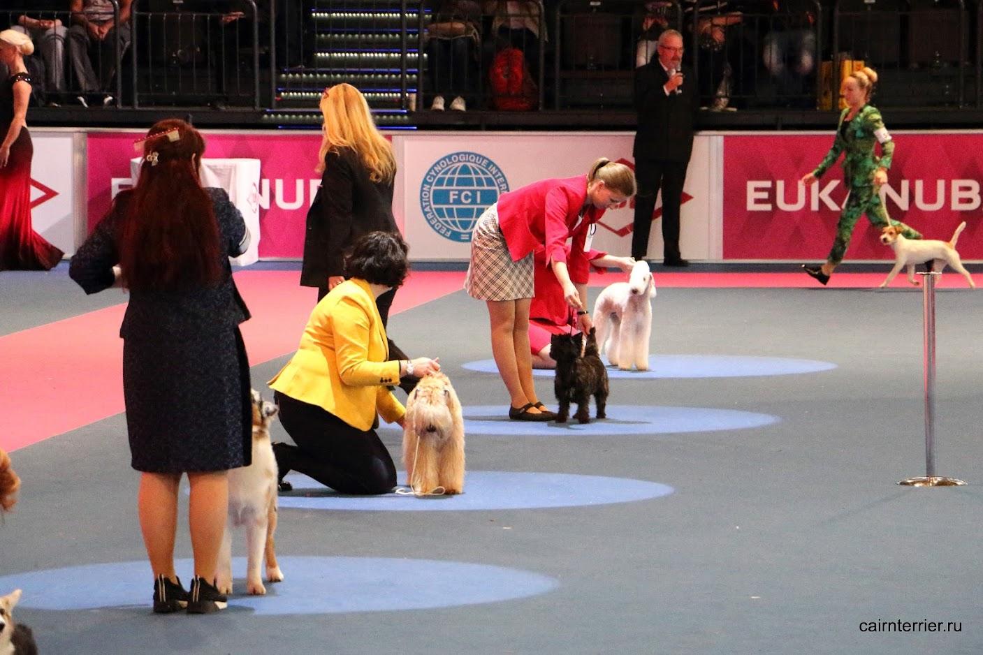Фото главного ринга выставки со щенками разных пород