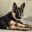 by Awais Mustafa - Animals - Dogs Portraits