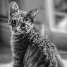 Bo! by Simon Wood - Animals - Cats Kittens ( canon, playing, uk, eos, kitten, cat, sweet, fun, cute, tamron, posing )