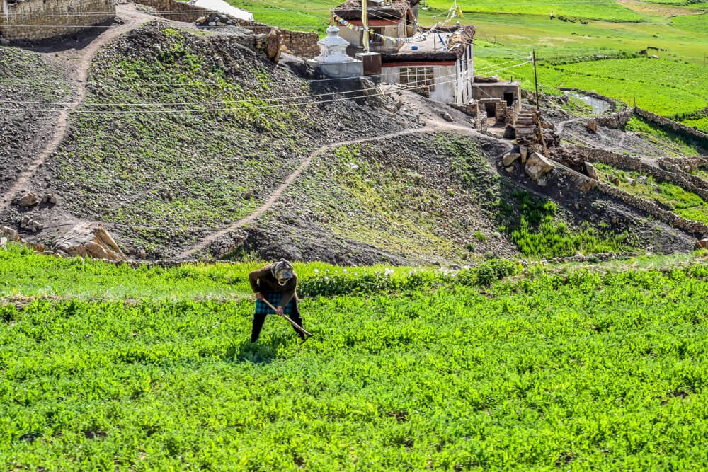 farmers+of+Spiti+valley+himachal+india.jpg