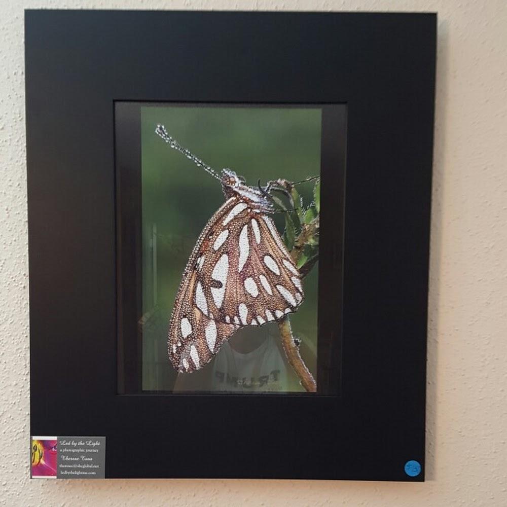 Glistening Butterfly