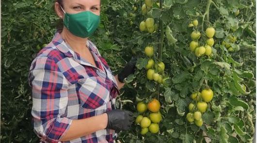 'Los héroes del tomate' propone un homenaje a los protagonistas
