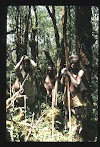 Papua. Tribes Baliem Valley Time Travel. Papua hunters with bows and arrows