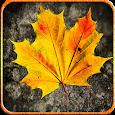 Autumn Frame Photo icon