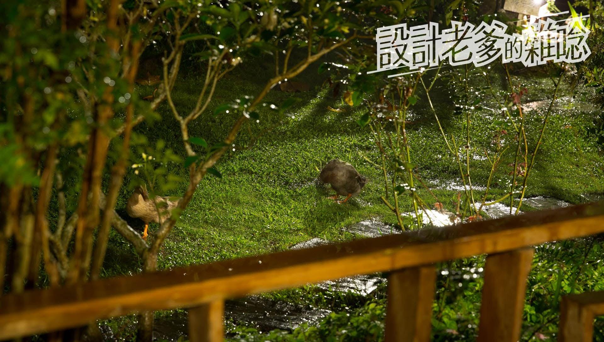 汎水淩山自然手感民宿...感受綠、感受生命、可以野放自己心靈的慢角落