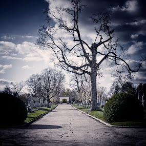 the drive by Brittany Humphrey - City,  Street & Park  City Parks ( park, tree, fall, street, cemetary )