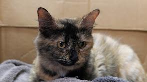 You've Gotta Be Kitten Me! thumbnail