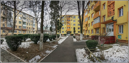 Photo: Cimisir, Banut (Buxus sempervivens) de pe Str. Rapsodiei, intre blocuri - 2017.02.03