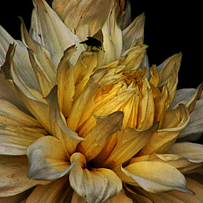 by Arkamitra Roy - Nature Up Close Flowers - 2011-2013