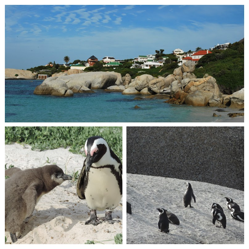 Boulders Beach Penguin Colony, Cape Town, South Africa