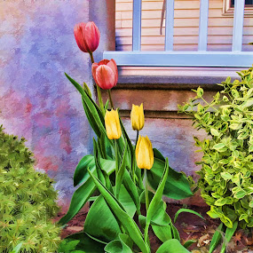 Painted Lips by Jackie Sleter - Flowers Flower Gardens ( red, green, yellow, tulips, spring, garden )