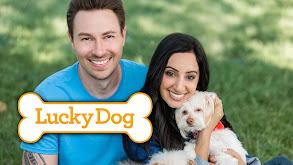 Lucky Dog thumbnail