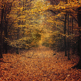 Fall Mood I. by Zsolt Zsigmond - Landscapes Forests ( foliage, forest, fall, nature, autumn, trees, landscape )