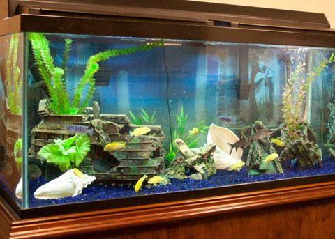 Aquarium landscaping ideas android apps on google play Aquarium landscape