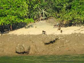 Photo: Island dwellers