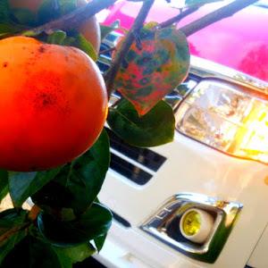 ハイエースバン TRH200Vのカスタム事例画像 シュナ 🐾🐶🐾CT2期生さんの2020年10月29日03:00の投稿