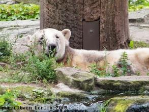 Photo: Knut schaut noch ganz verschlafen ;-)