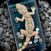 Gecko in Phone scary joke