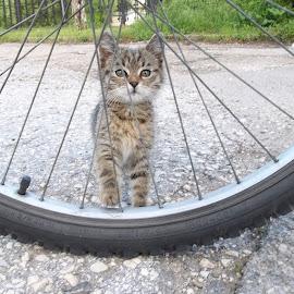 Коте by Georgi Kolev - Animals - Cats Kittens ( слънце., път., трева., коте., ден. )
