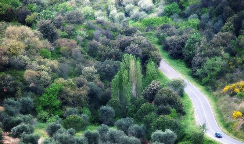 100 sfumature di verde di Luciano Fontebasso