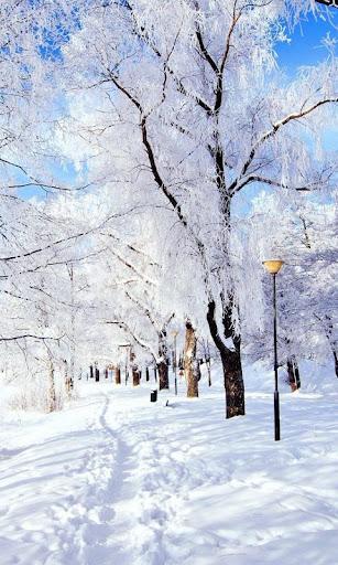 LWP 겨울 눈