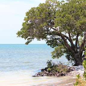 Anne's Beach, Key West  by Heather Taulbee McIntyre - Novices Only Landscapes ( nature, tree, outdoor, summer, key west )