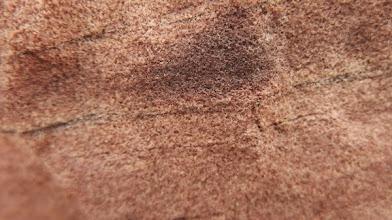Photo: Geologia: Arenisca micàcea roja (detall).