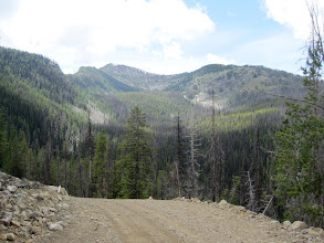 Photo: View on national forest road from Salmon Meadows to Long Swamp