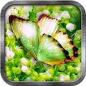 Green Butterfly Live Wallpaper icon