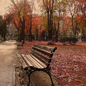 Park bench by Milan Milosevic ヅ - City,  Street & Park  City Parks ( bench, park, cities, autumn, serbia, fall, pwcbenches, leaves, city )