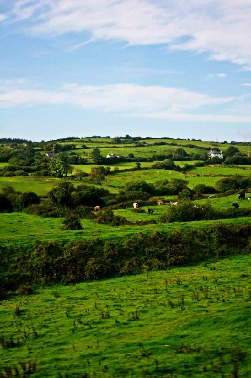 Il verde dell'Irlanda. di micphotography